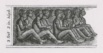 Esclavos encadenados en la bodega (de 1 m de puntal) de un barco negrero (s. XIX)